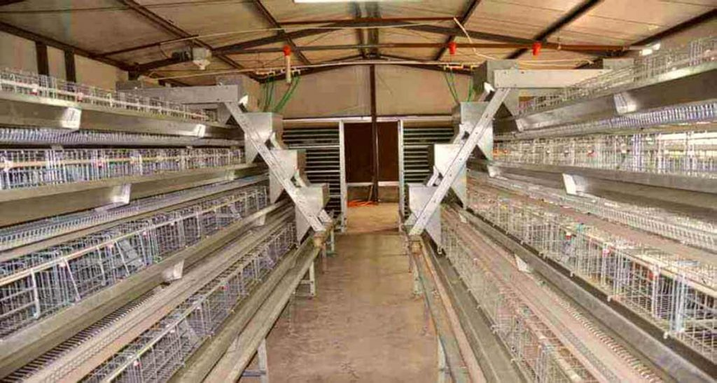 Automatic 3 tier layer cage system
